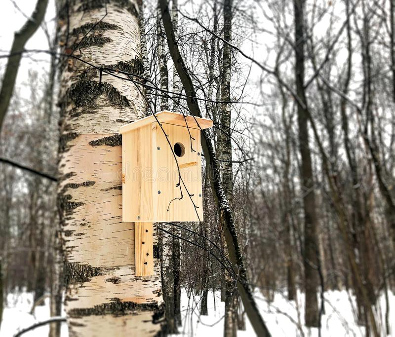 New birdhouse on birch stock images