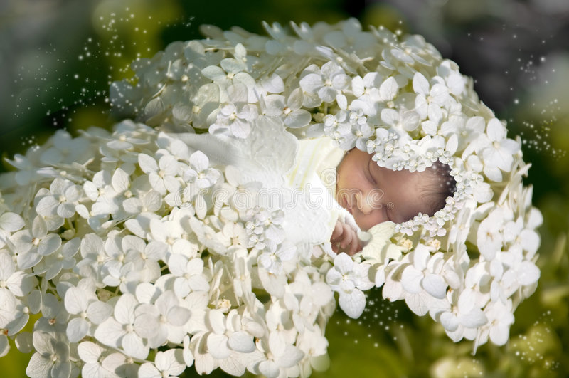 Download New born baby stock photo. Image of child, little, magic - 7969772
