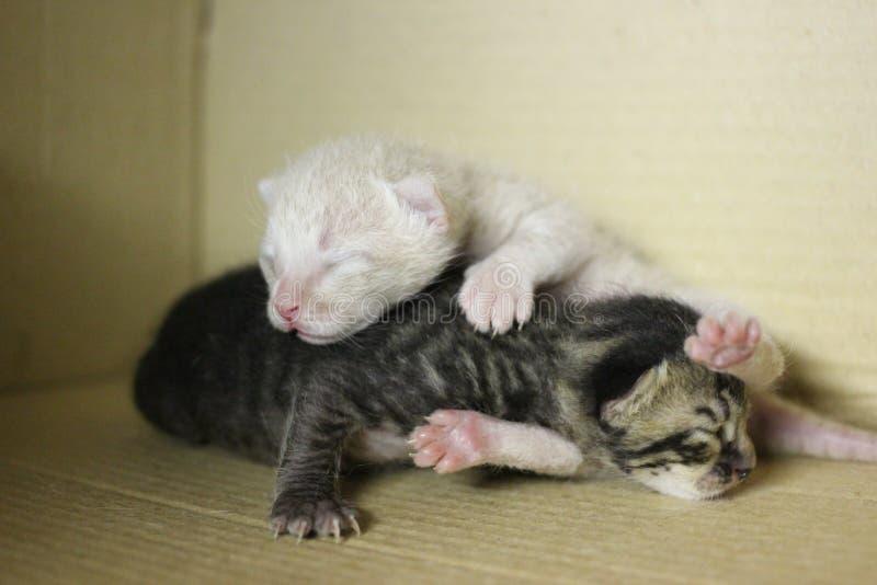 New born baby kittens stock image