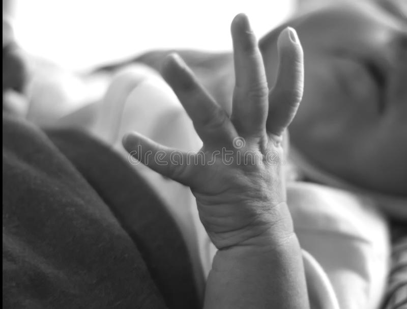 New born Baby hand black and white royalty free stock photos