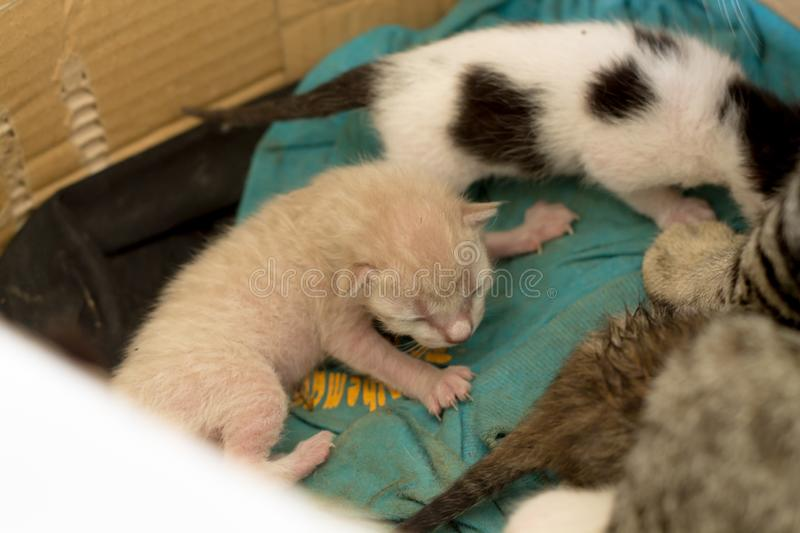 New born kittens in a Carton. Cat family new born kittens in a Carton, mother cat to breastfeed royalty free stock image