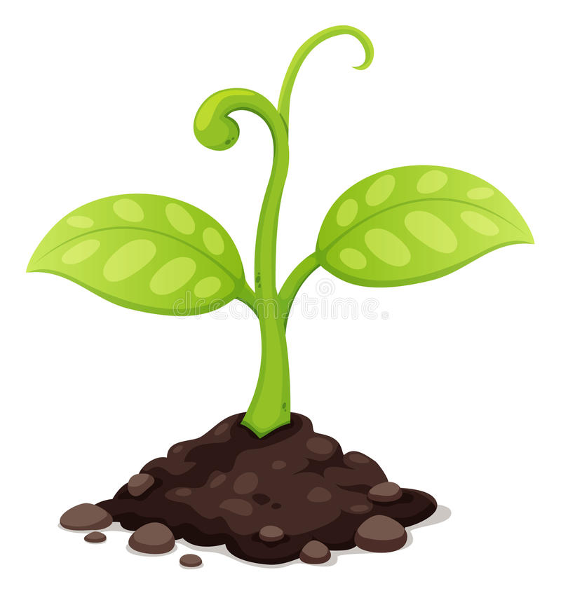 New born plant growing vector illustration
