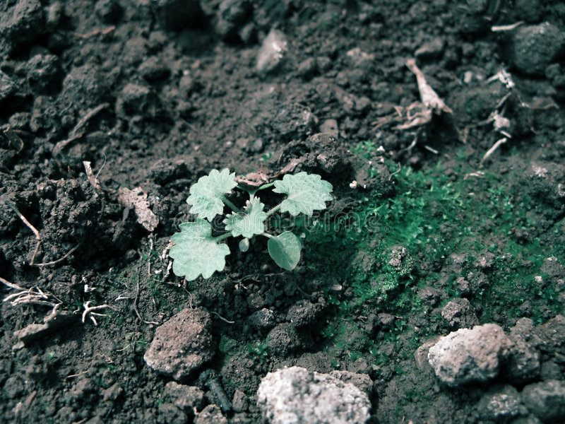 New Born Seedlings Royalty Free Stock Image