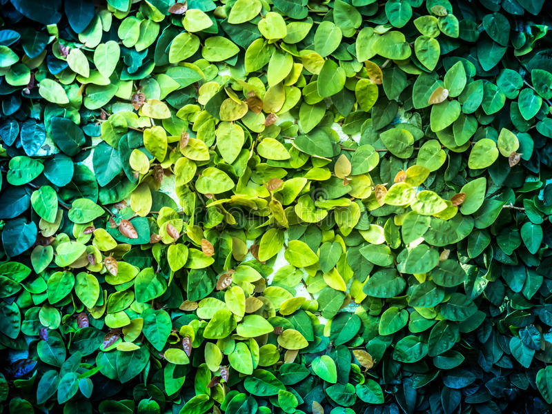 New born small leaf ivy and sunshine royalty free stock images
