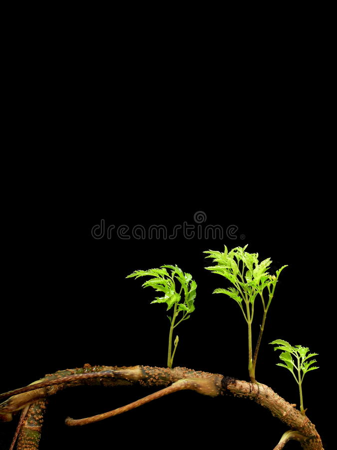 New branches of plant stock photography