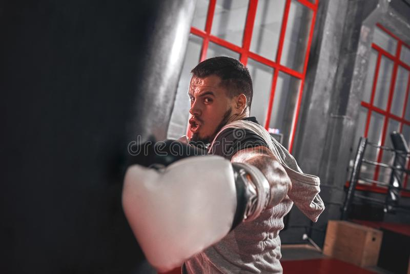 He is a new champion. Aggressive focused athlete in sports clothing boxing on heavy punch bag, killing workout before royalty free stock photos