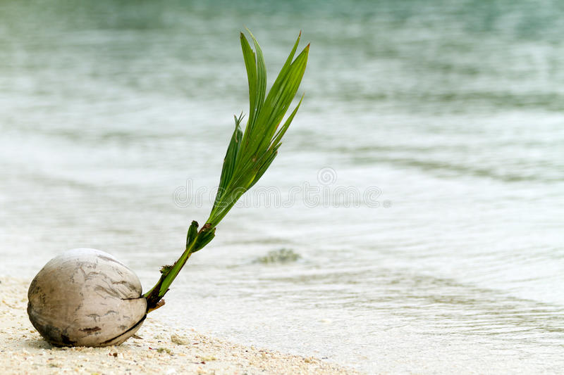 New coconut tree stock images