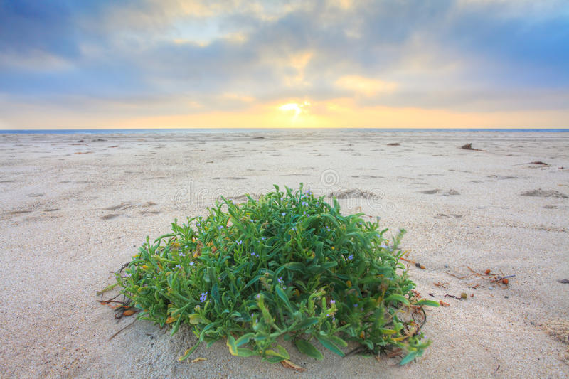 New Day.  Sunrise At The Beach Royalty Free Stock Photos