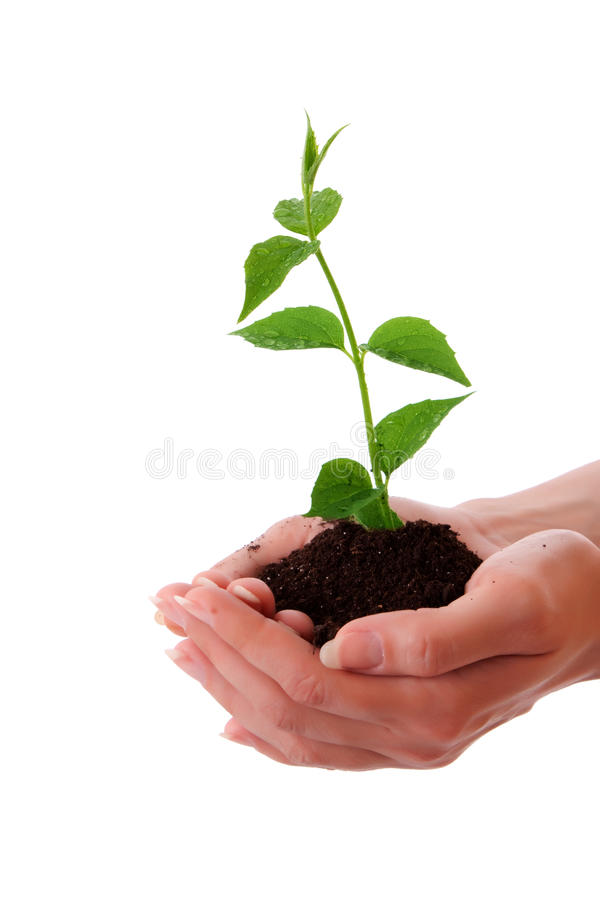 Download New development stock image. Image of growth, nature - 10041279