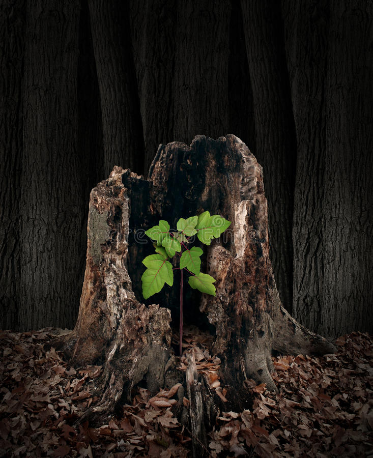 New Development. And renewal concept as a hollow old rotting tree stump with a growing green sapling emerging and replacing the past as metaphor for revival in stock illustration