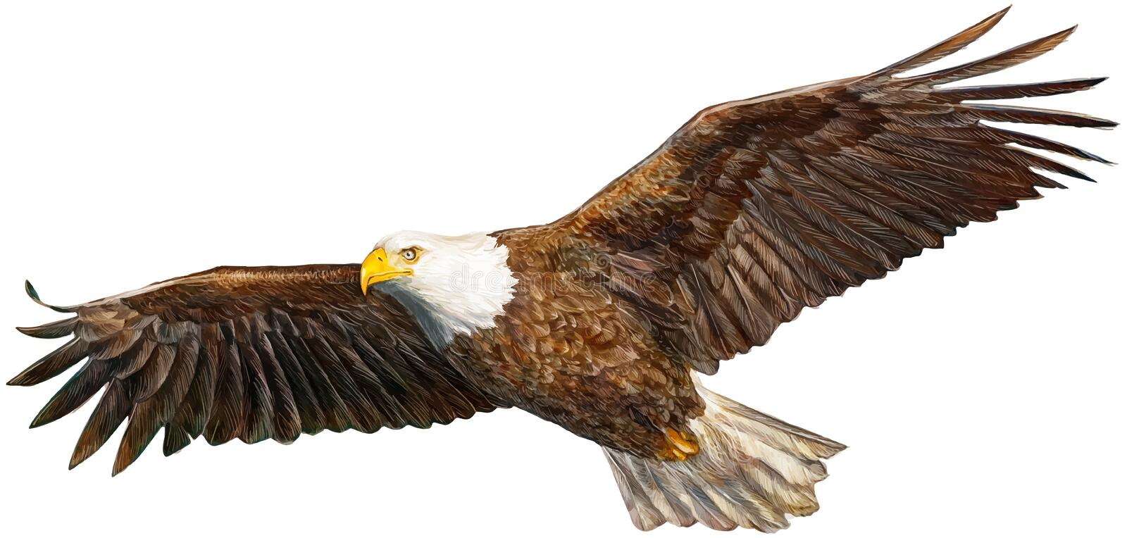 New eagle flying. Bald eagle flying hand drawing hand draw on white background vector