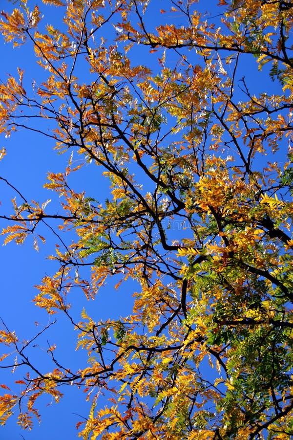 New England Fall Foliage royalty free stock photography