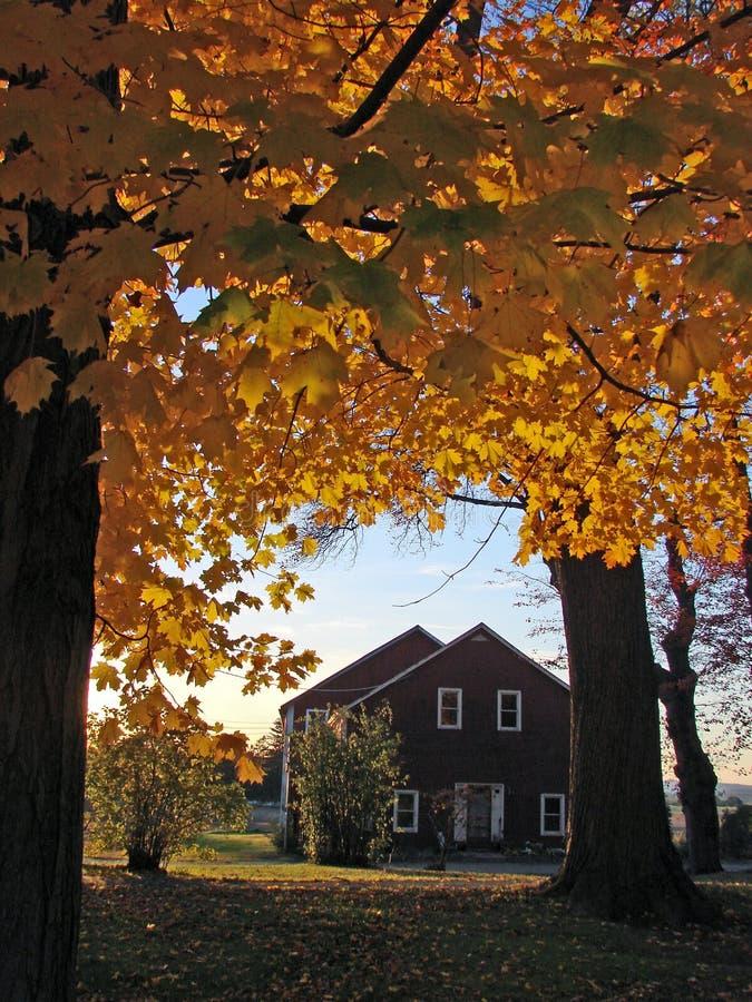 New England Fall Foliage. Brilliant New England peak fall foliage royalty free stock photo