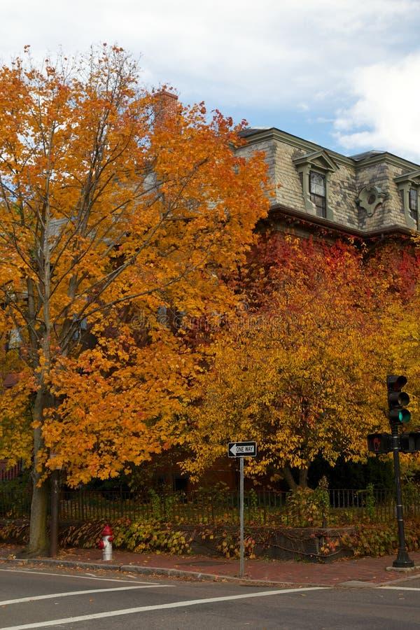 New England Fall Foliage. Trees with spectacular red and orange New England fall foliage in Cambridge, MA, USA royalty free stock photos