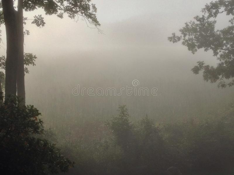 New England Fog Rolling Through A Forest Glen stock images