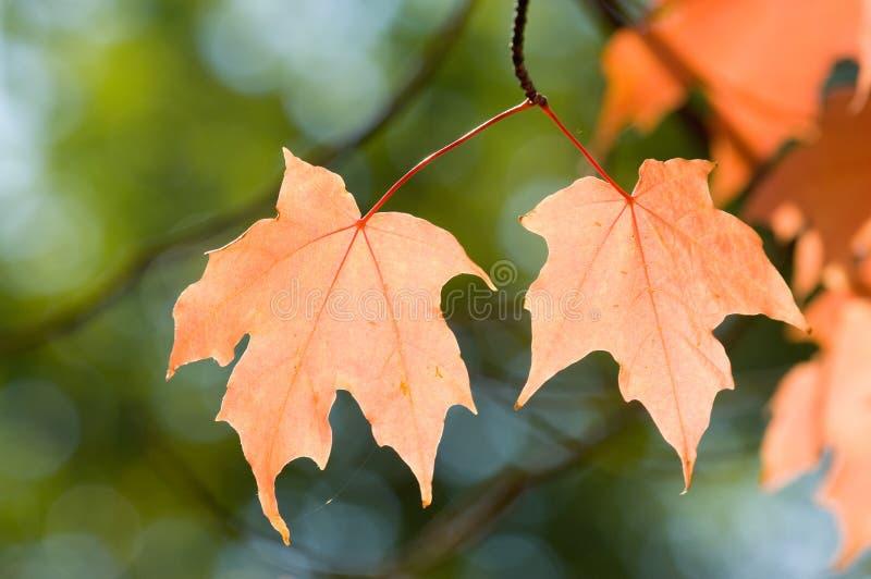 New England foliage stock photography