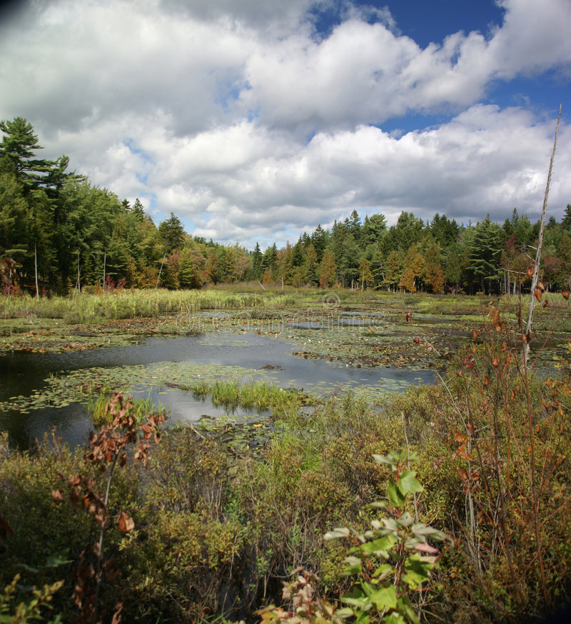 New England marsh & lily pond stock photo
