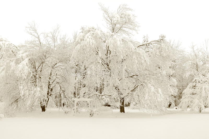 New England snow fall. First New England snow fall stock photo