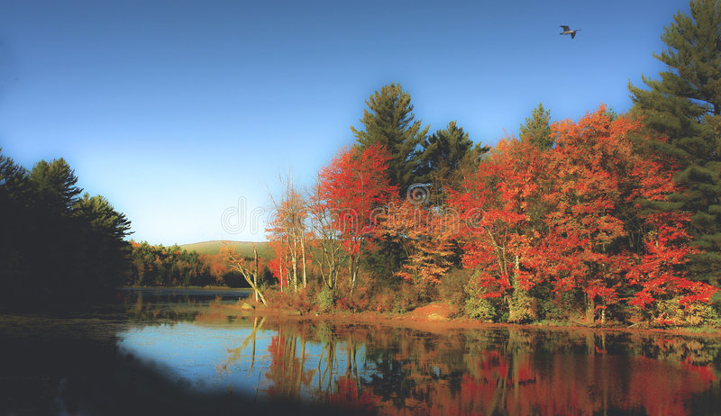 New England state park royalty free stock images