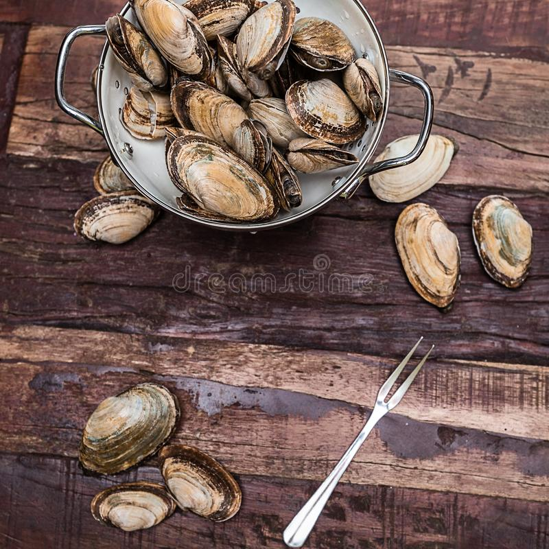 New England Steamer Clams Ready to be Cooked. Steamer clams from New England in a whiten collider on a rustic table ready are cleaned and ready for cooking royalty free stock photography