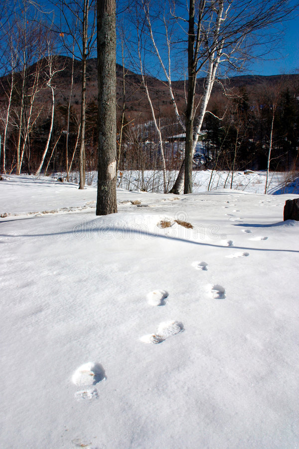 Free New England Winter Stock Image - 337301
