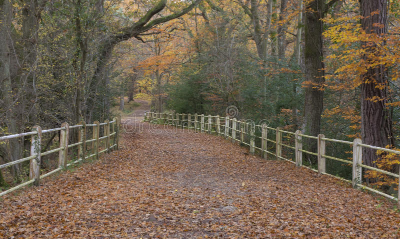 The New Forest in Autumn. A view of a path in the New Forest, Hampshire, UK in Autumn stock image