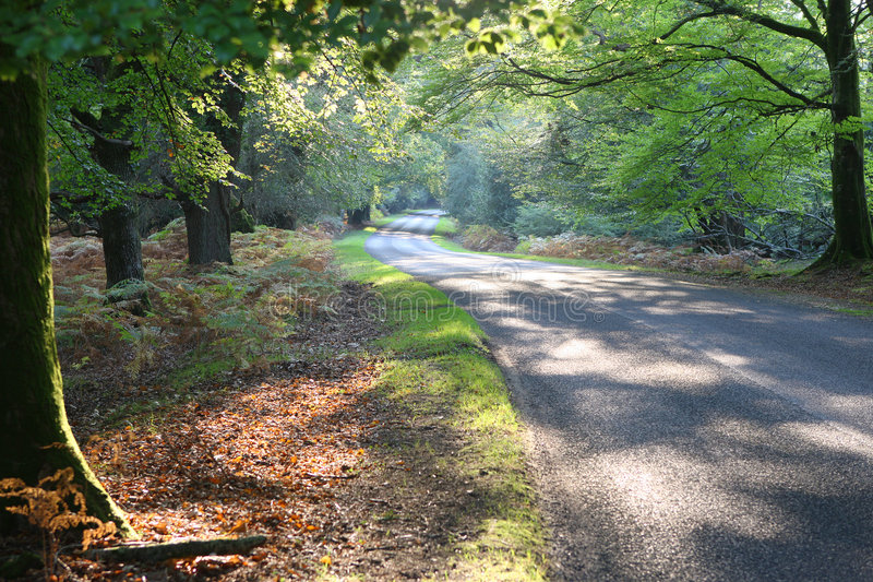 New Forest Drive in Autumn stock photo