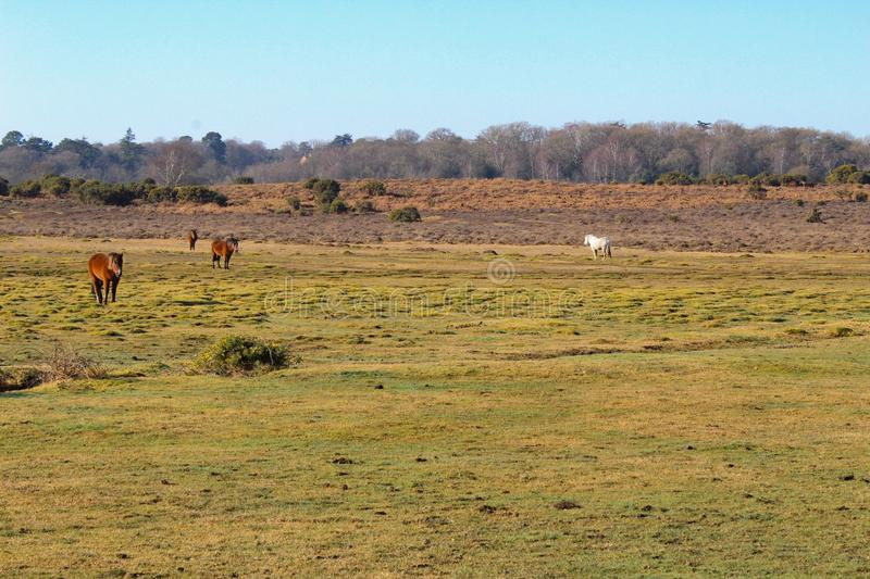 New Forest Landscape royalty free stock images