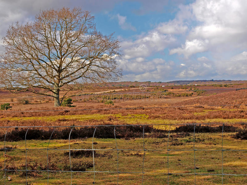 Download New Forest Tree stock photo. Image of season, colour - 13213006