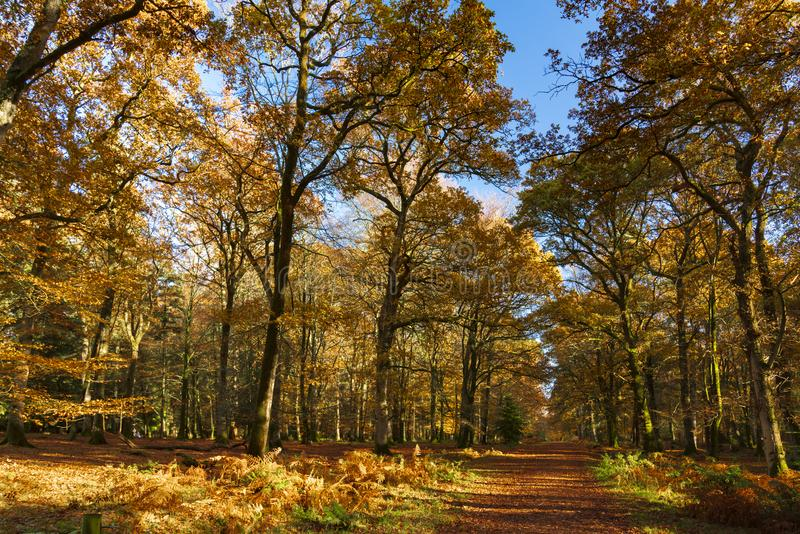 New Forest trees in autumn stock photo