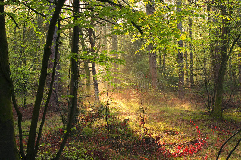 New Forest Woodland stock image