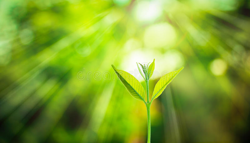 New fresh small plant growth up on green blurred nature royalty free stock photos