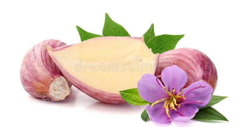 New garlic. royalty free stock image