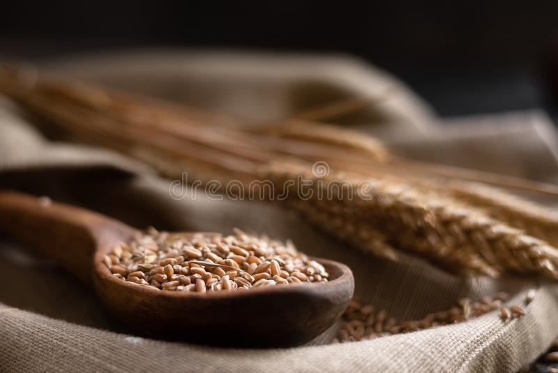 A new grain harvest, a wooden spoon lying on the table in it are filled with wheat grain stock image