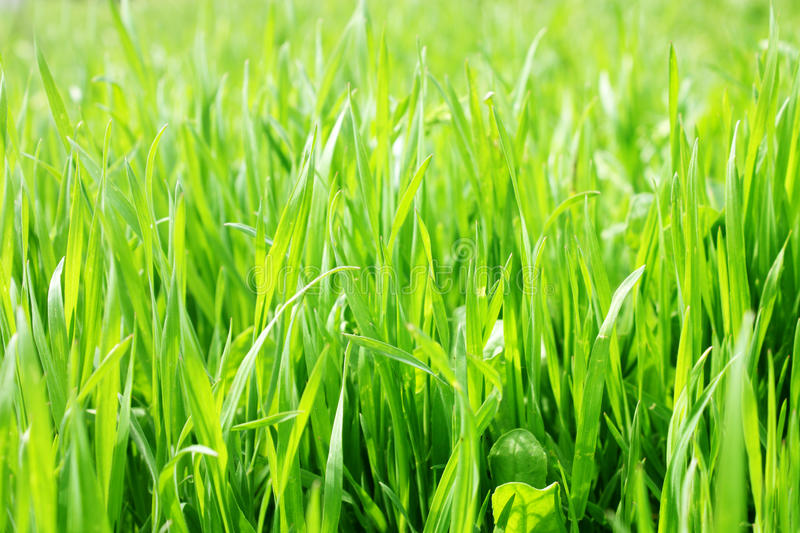 New grass royalty free stock photos