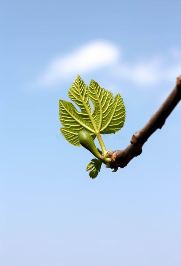 New Green Life Stock Photo