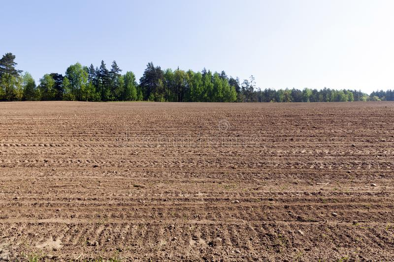 New green maize sprouts. Appearance and growth of new green maize sprouts on a plowed agricultural field. photo spring, landscape with blue sky and trees on the stock images
