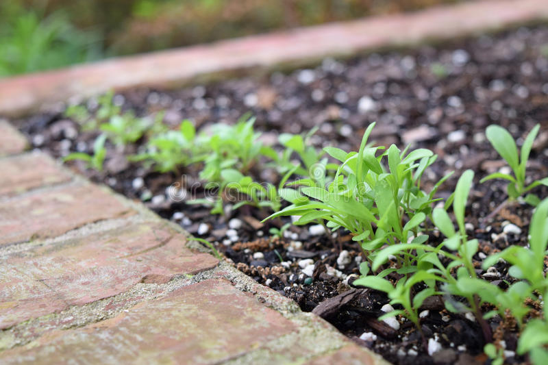 New green plants sprouting from seeds stock image