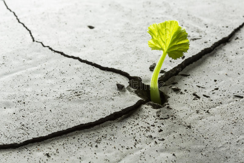 New growing life. Young green plant growing from cement floor stock images