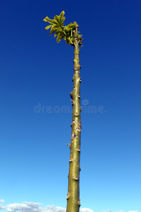 New Growth royalty free stock photos