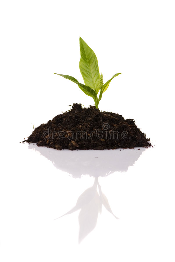 New Growth Royalty Free Stock Image