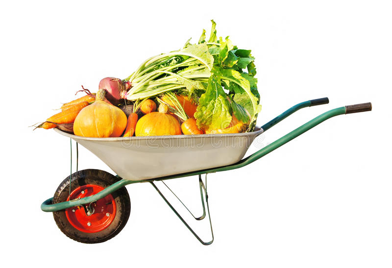 The new harvest royalty free stock photo