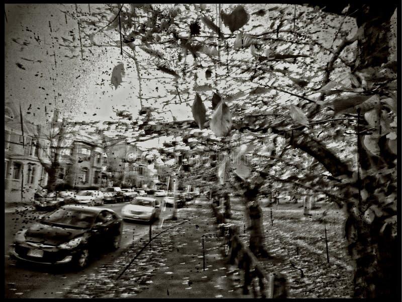 New Haven, automne et venteux sur la place de Wooster, ensemble de neuf travaux images stock