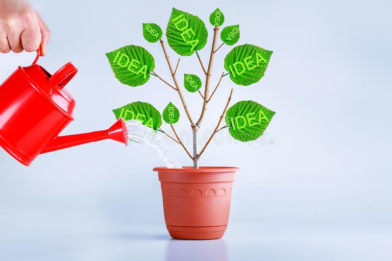 New idea creative concept. Birth, growing idea plant. Businessman growing ideas royalty free stock images