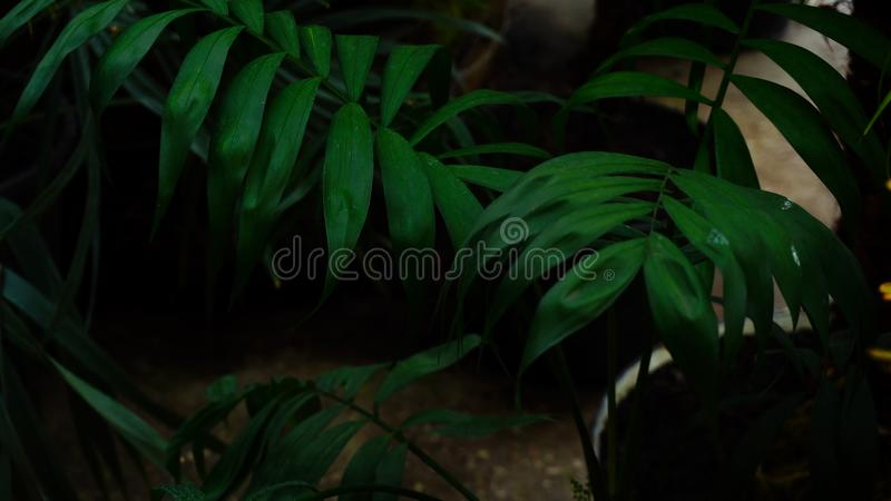New kind of palm tree grew on tropical islands.n stock photo