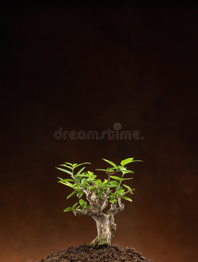 Download New Leaf Stock Images - Image: 3837944
