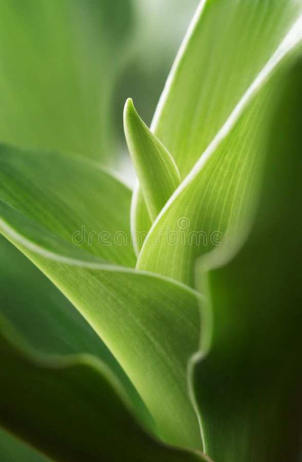 Free New Leaf Stock Images - 7638044