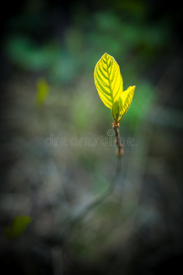 New leaf growing of ground. See my other works in portfolio royalty free stock image