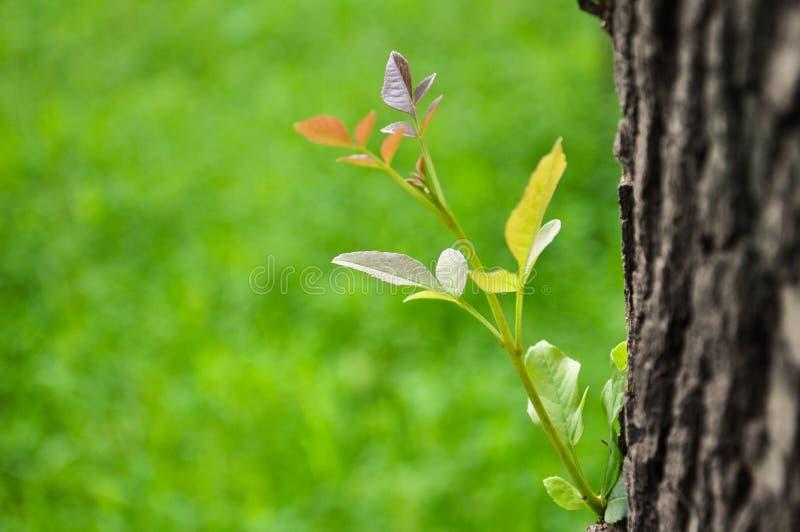 New leaf stock photos