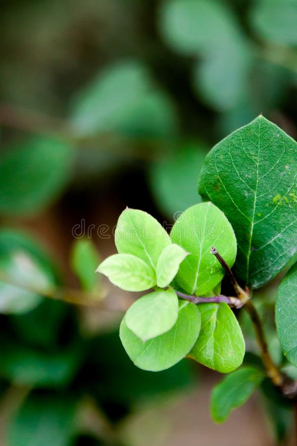 A new leaf sprout, a new life royalty free stock photo